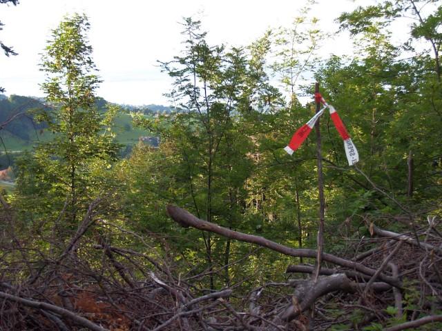 Uebung Personensuche Wald und Rehetobel Feuerwehr 2007 35.jpg.jpg